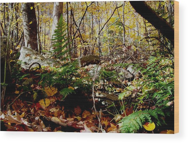 Landscape Wood Print featuring the photograph Contrasts by David Reese