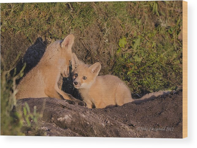 Florida Wood Print featuring the photograph Foxy Talk by Mike Fitzgerald