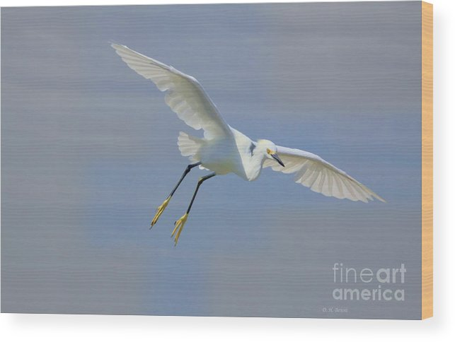 Egret Wood Print featuring the photograph Here I Come by Deborah Benoit