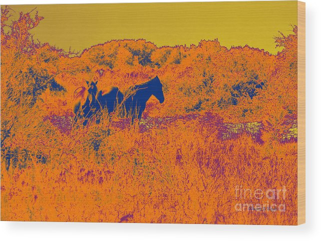Corolla Wood Print featuring the photograph Outer Banks Horses by Paulette B Wright