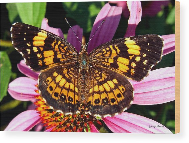 Butterfly Wood Print featuring the photograph Picture Perfect  Butterfly 003 by George Bostian