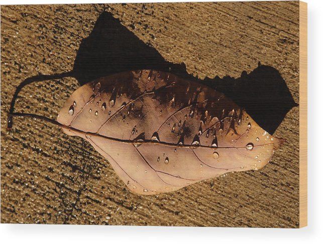 Leaves Wood Print featuring the photograph Upsidedown Brown by Joe Schofield