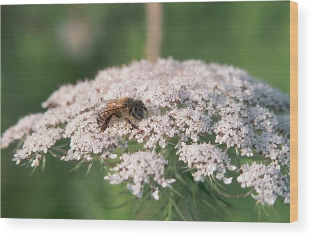 Bee Wood Print featuring the photograph 070406-76 by Mike Davis