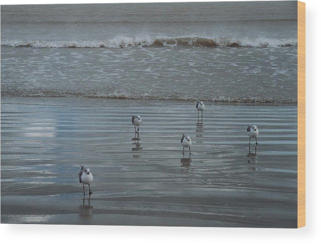 Birds Wood Print featuring the photograph Padre Island Shore Birds by Wendell Baggett