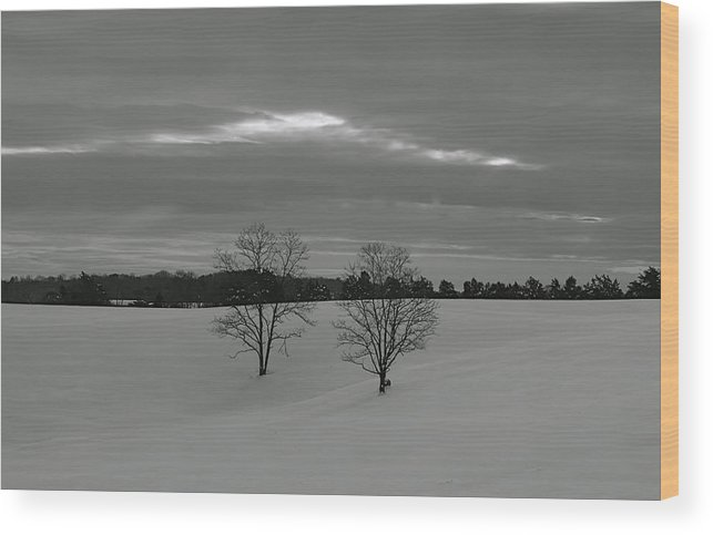 Trees Wood Print featuring the photograph Black And White by Glenn Vidal