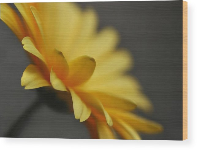 Flower Wood Print featuring the photograph Edges by Dan Holm