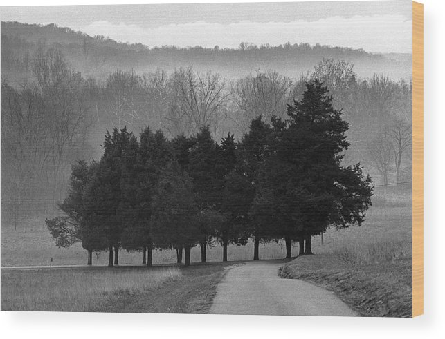 Evergreen Wood Print featuring the photograph Evergreen Mist by Paul Trunk