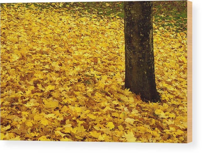 Leaves Wood Print featuring the photograph Fall Leaves by Val Jolley