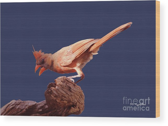 Cardinal Wood Print featuring the photograph Finding Shade by DiDi Higginbotham
