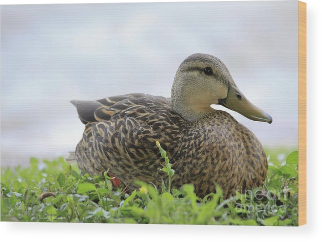 Mallard Wood Print featuring the photograph Florida Mallard by Deborah Benoit