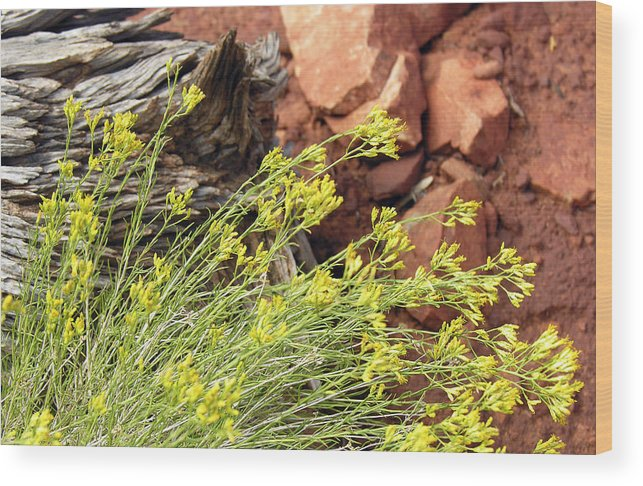 Flower Wood Print featuring the photograph Flower Wood And Rock by Marilyn Hunt