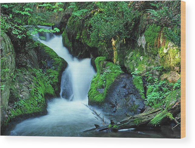 Silver Lead Creek Flows Softly Through A Michigan Hill Side Wood Print featuring the photograph Flowing Softly by Bill Morgenstern