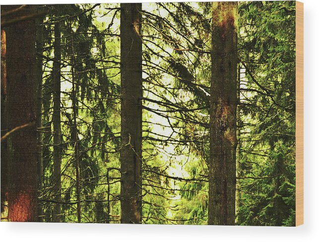 Forest Wood Print featuring the photograph Forest Light by Tinto Designs