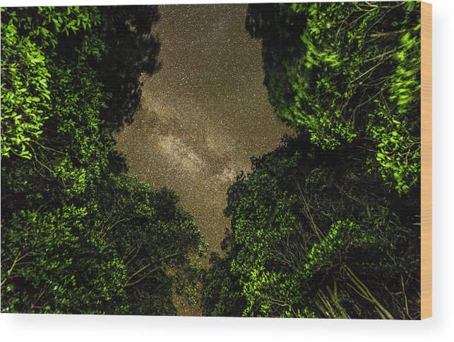 Forest Wood Print featuring the photograph Forest Star Patch by T Brian Jones