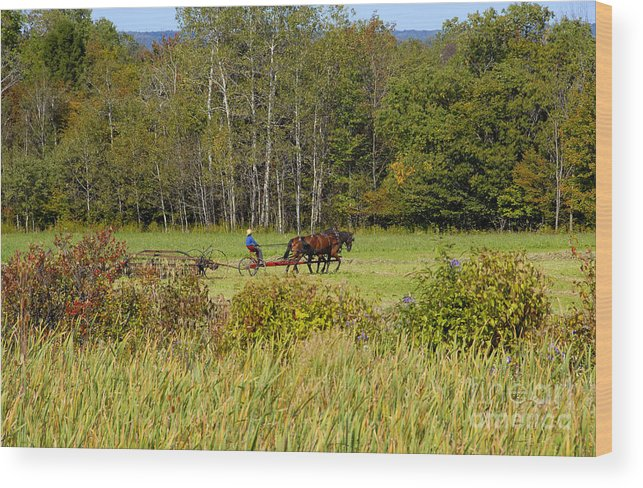 Green Farming Wood Print featuring the photograph Green Farming by David Lee Thompson