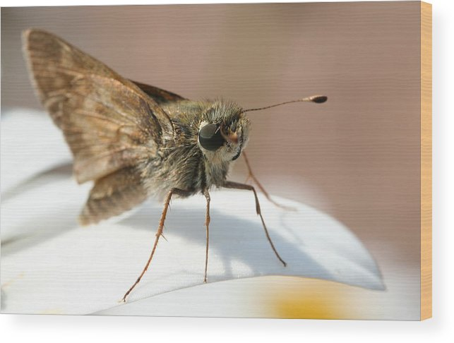 Moth Wood Print featuring the photograph Hello There. by Jason Hochman