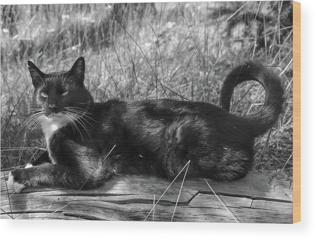 Cat Wood Print featuring the photograph Hook by Debbie Lind