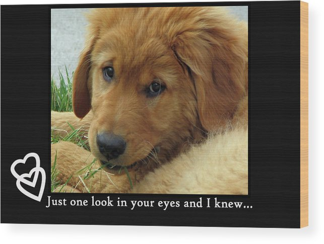 Puppy Wood Print featuring the photograph Just One Look by Debbie Lind