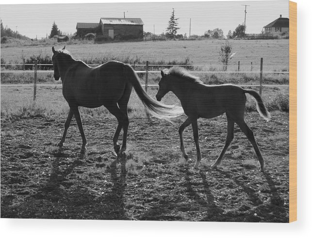 Black Wood Print featuring the photograph Mother And Baby by J D Banks
