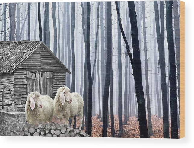 Sheep Wood Print featuring the photograph Peacefully by Manfred Lutzius