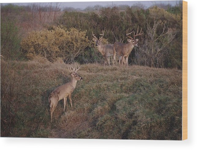 Deer Wood Print featuring the photograph Private Ranch 2 by Wendell Baggett