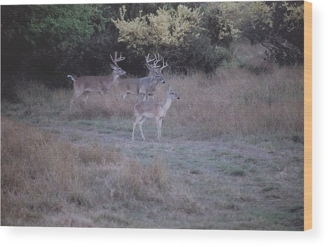 Deer Wood Print featuring the photograph Private Ranch 4 by Wendell Baggett