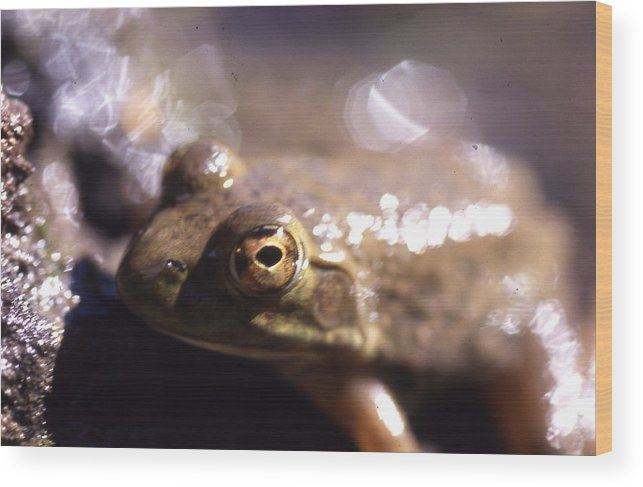 Wood Print featuring the photograph Ribbit by Curtis J Neeley Jr