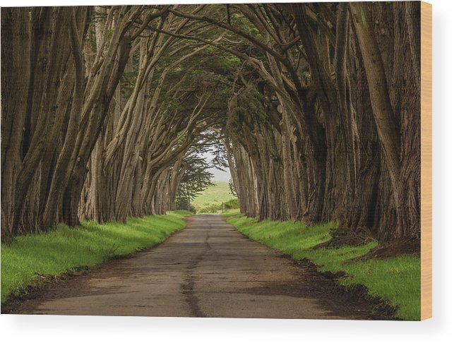 California Wood Print featuring the photograph Road From The Station by Joe Azevedo