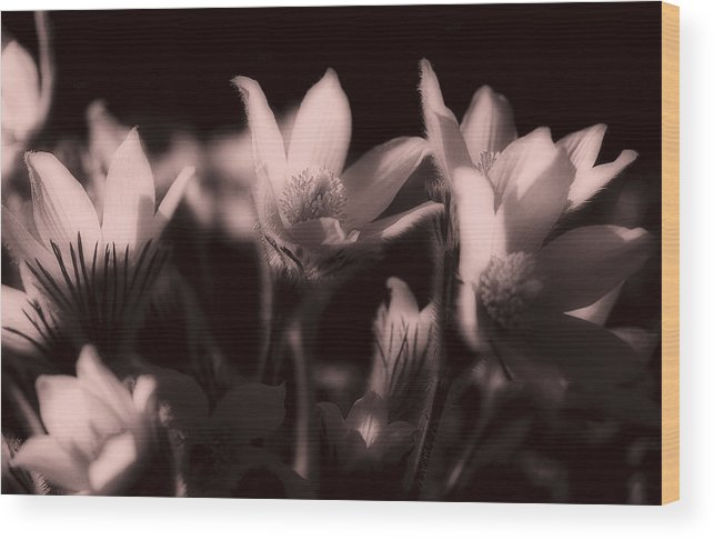 Flowers Wood Print featuring the photograph Sleepy Flowers 2 by Marilyn Hunt