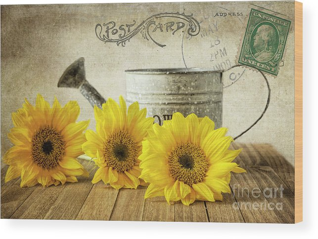 Sunflowers Wood Print featuring the photograph Sunflowers Postcard by Elisabeth Lucas