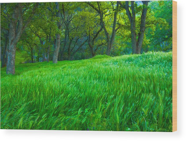 Landscape Wood Print featuring the photograph Tall Grass At Twilight by Marc Crumpler