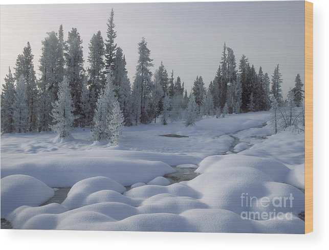 Yellowstone Wood Print featuring the photograph West Thumb Snow Pillows by Sandra Bronstein