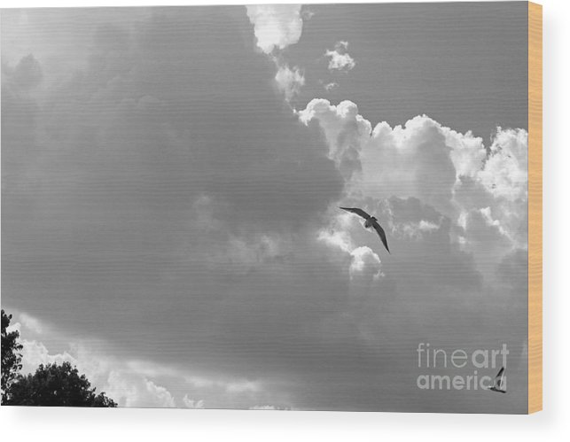 Seascapes Wood Print featuring the photograph Seagulls Mb043bw by Earl Johnson