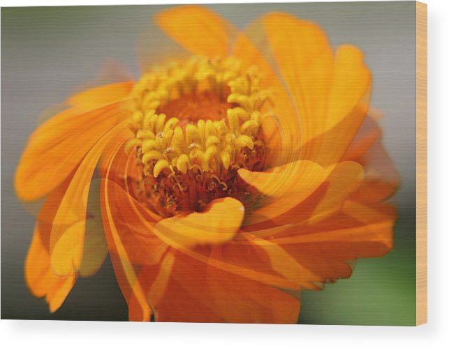 Flower Wood Print featuring the photograph Twirl by Alan Skonieczny