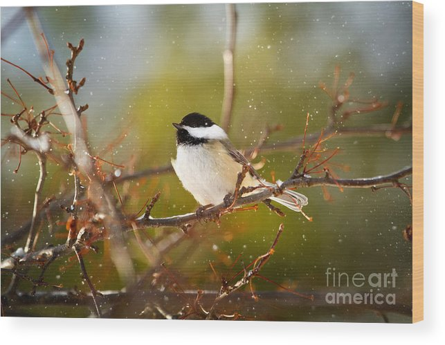 Black-capped Chickadee Wood Print featuring the photograph Adventure Is Out There by Amy Bish