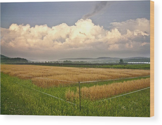 Landscape Wood Print featuring the photograph After The Storm by Stan Bowman