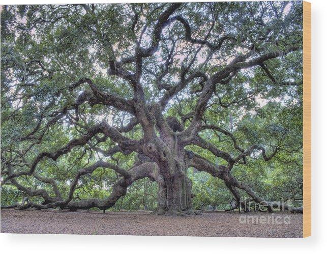 Angel Oak Wood Print featuring the photograph Angel Oak by Dustin K Ryan