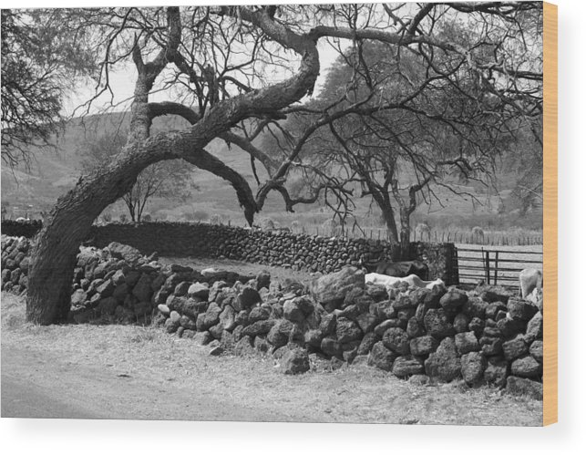 Tree Wood Print featuring the photograph Bent Tree by Tod Ramey