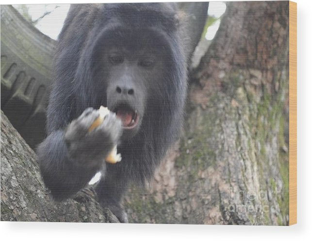 Monkey Wood Print featuring the photograph Black Howler Monkey by CJ Everhardt