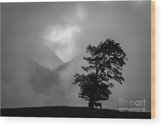 Wood Print featuring the photograph Cloud Kingdom by Vlad Dobrescu