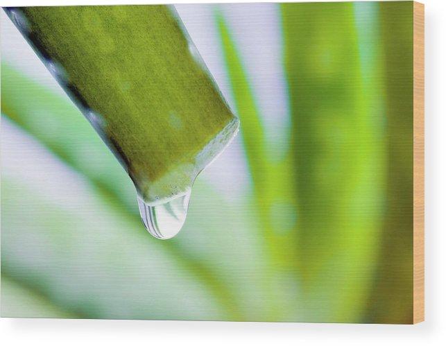 Aloe Vera Wood Print featuring the photograph Cut Aloe Vera Leaf by Alex Hyde