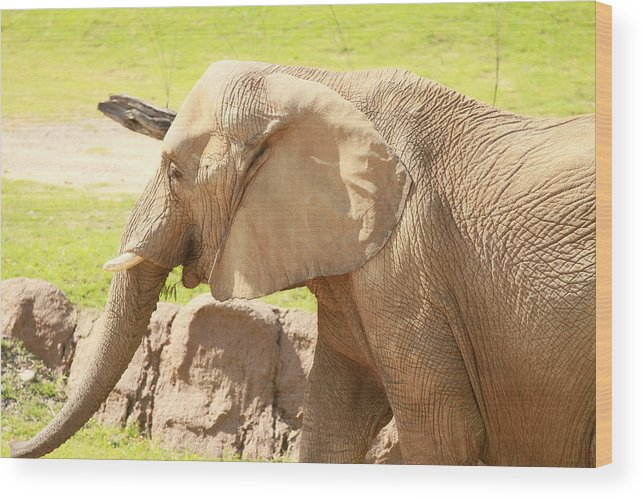 Nature Wood Print featuring the photograph Elephant by Tinjoe Mbugus