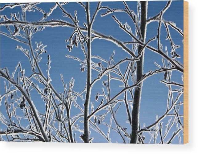 Branch Wood Print featuring the photograph Frozen Tree Branches  In Winter by Jean Schweitzer
