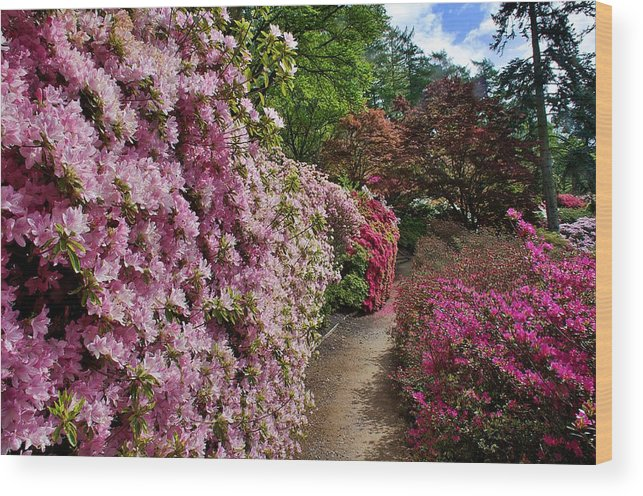 Flower Wood Print featuring the photograph Lush by David Resnikoff