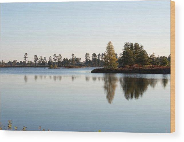 Wetland Wood Print featuring the photograph Michigan Wetland by Linda Kerkau