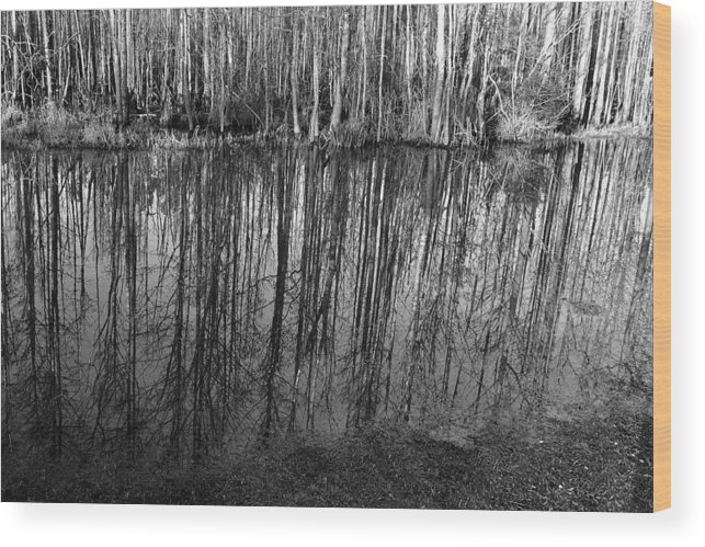 Reflection Wood Print featuring the photograph Reflections by George Taylor
