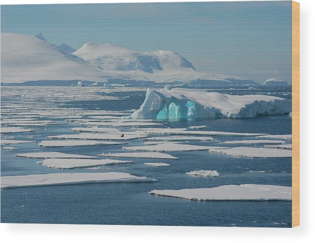 Antarctic Peninsula Wood Print featuring the photograph South Of The Antarctic Circle by Inger Hogstrom