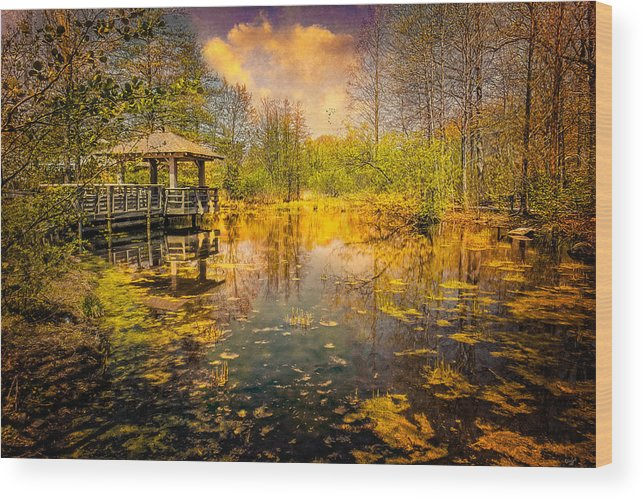 Pond Wood Print featuring the photograph The Wetlands by Chris Lord