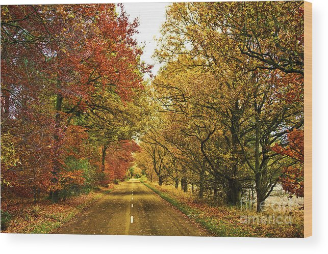 Autumn Wood Print featuring the photograph The Road To The Fall by Darren Burroughs