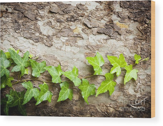 Tree Wood Print featuring the photograph Tree Vine by Tim Hester
